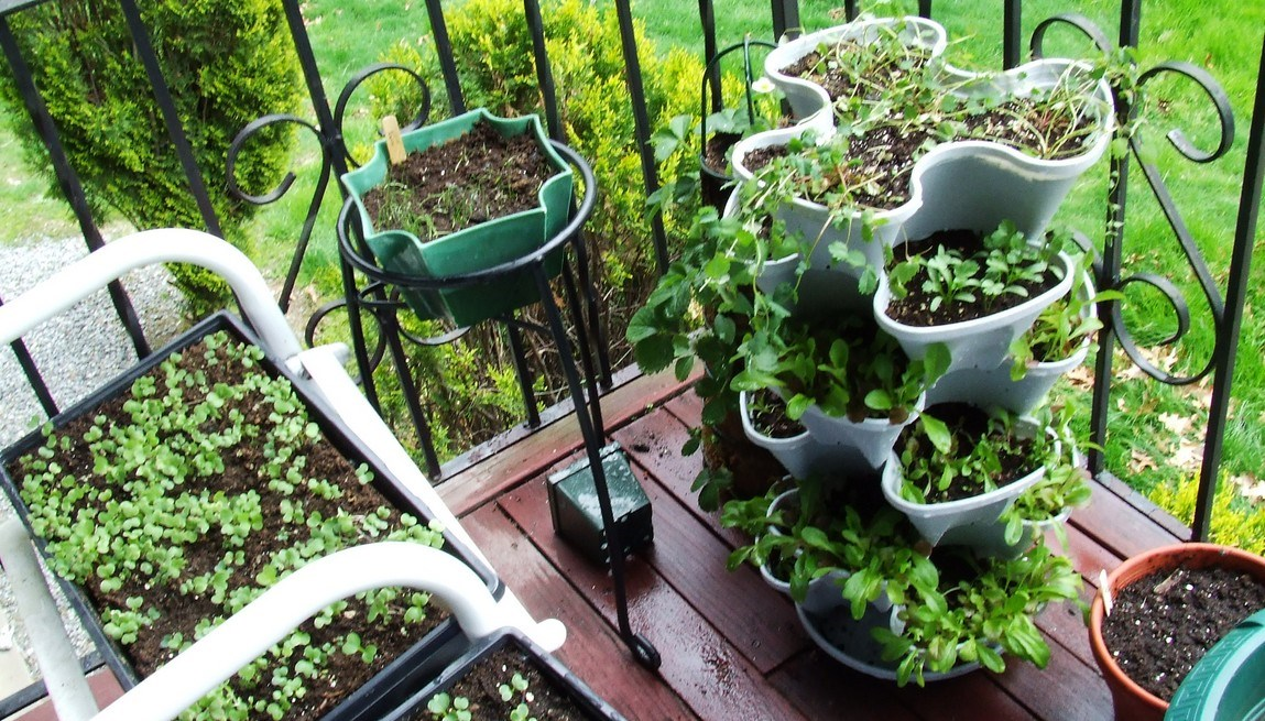 Good-balcony-vegetable-garden_cr
