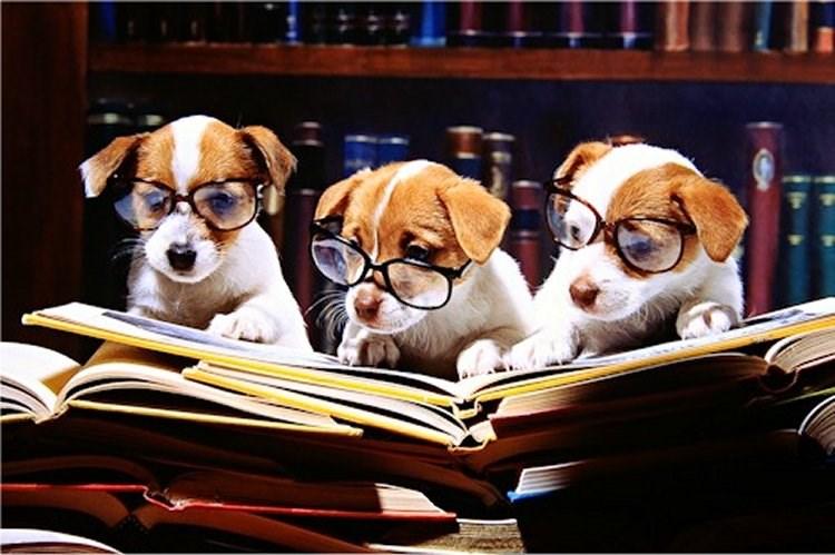 Книги о собаках. Про дружбу, любовь и преданность
