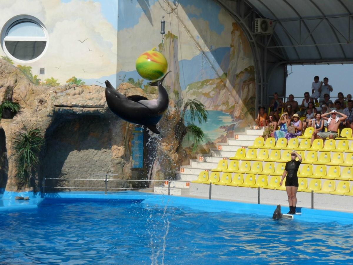 Отдых в Одессе с детьми. Веревочный парк, дельфинарий и театр