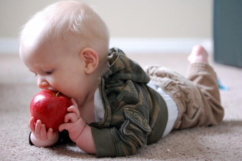 imagesWheres-the-Fruit53E7baby-eating-apple