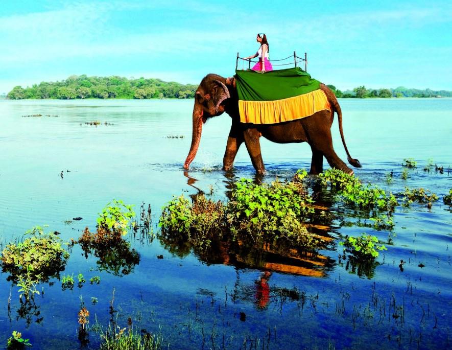 Что обязательно нужно посмотреть на Шри Ланке: пляжи, храмы, заповедники, чайные плантации и след Адама