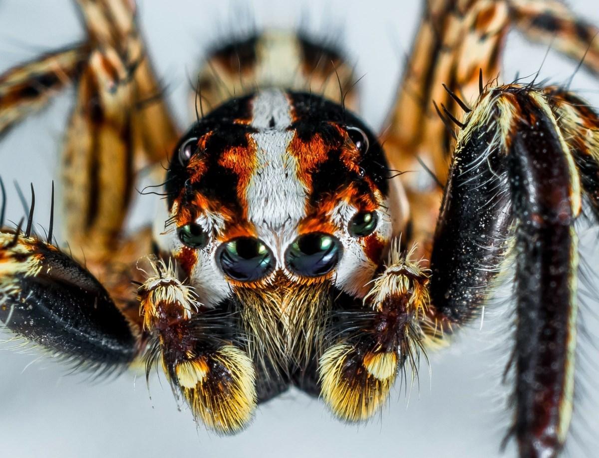 Детские страхи. Что делать если ребенок боится пауков и не только
