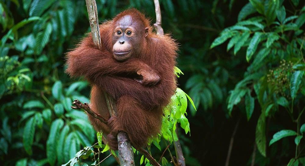 Чему можно научится у орангутанга Йоси. О взгляде нейропсихолога на двигательную активность ребенка