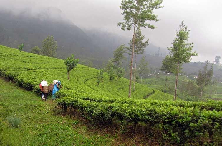 Шри-Ланка – «Индия по-английски»