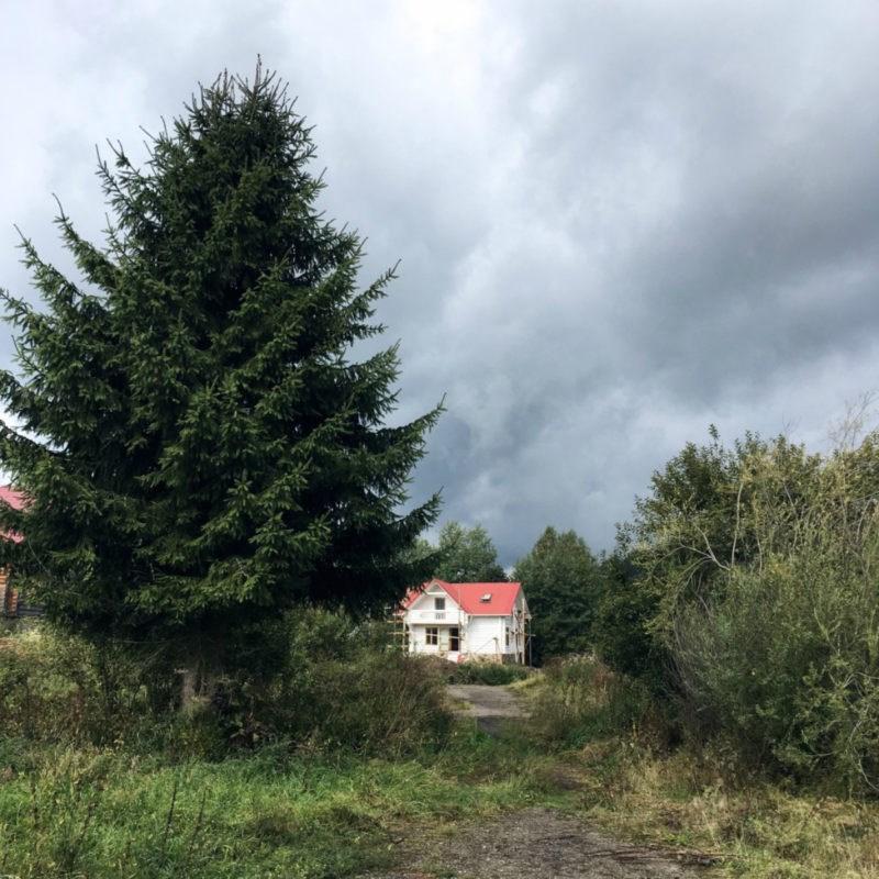 С асфальта на траву: как мы променяли Киев на Карпаты
