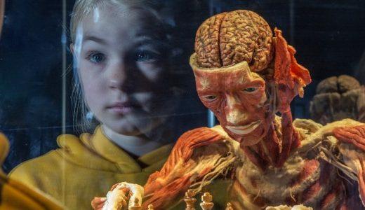Экспонатами шокирующей выставки на ВДНГ станут человеческие тела после смерти