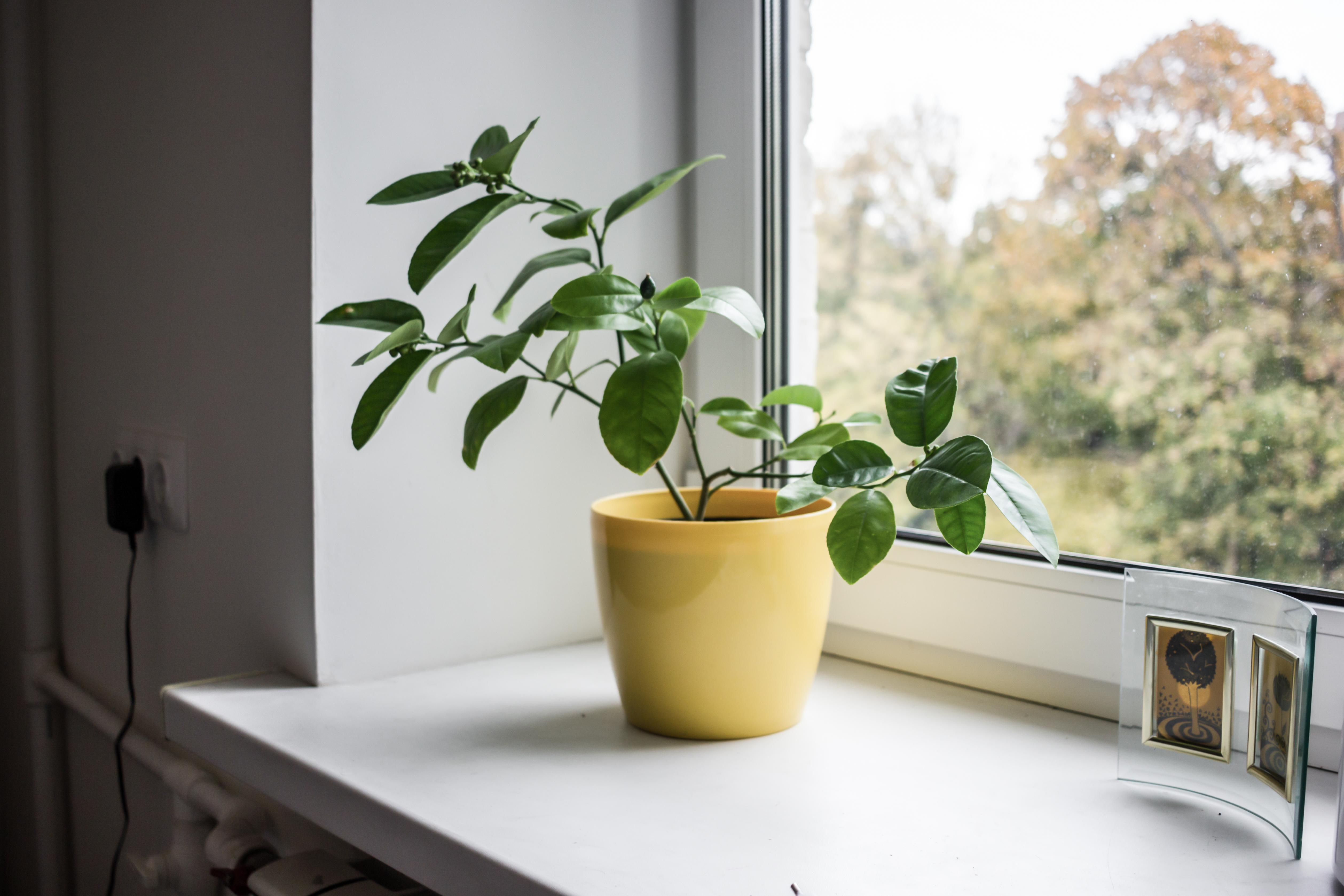 Детская комната и растения