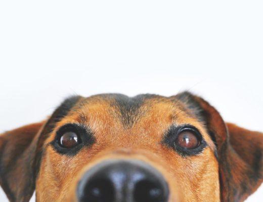 Можно ли заразиться коронавирусом от кошек и собак? Отвечает МОЗ