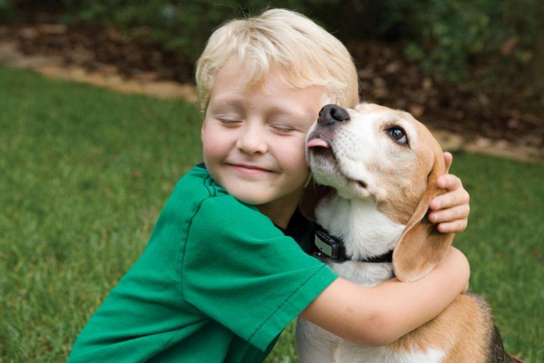 Як діяти, коли дитина просить завести тварину