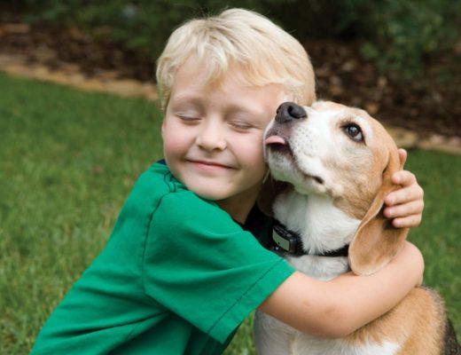 Как действовать, если ребенок просит завести животное
